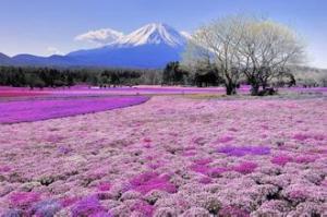 富士の景色